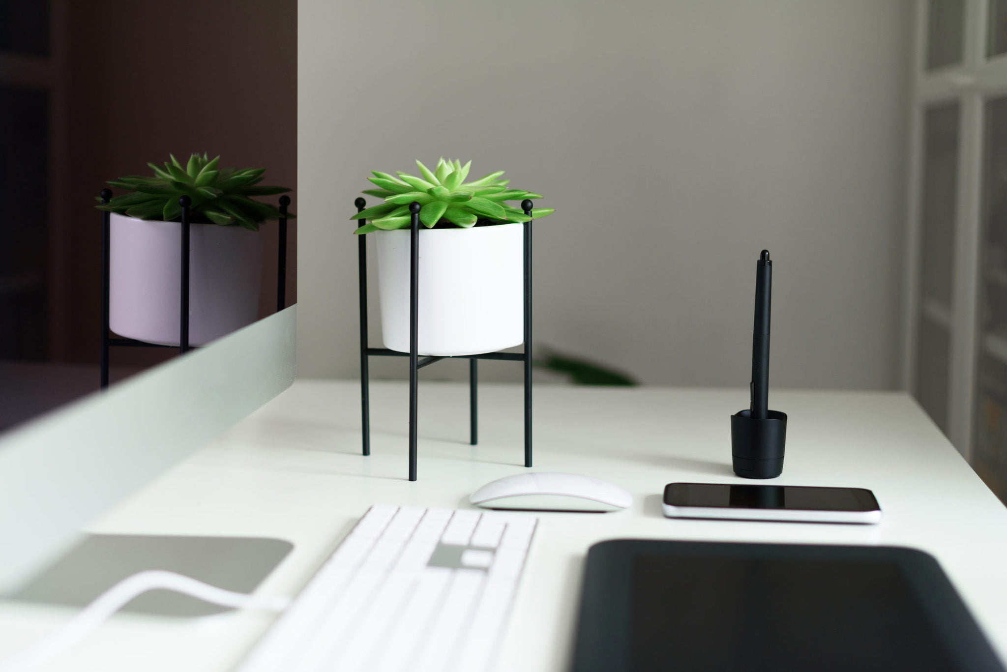 Find Your Favorite Plant to Keep You Company